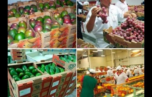 Dinamismo de los productos agros con valor agregado impulsaron el crecimiento de las exportaciones peruanas a la UE.